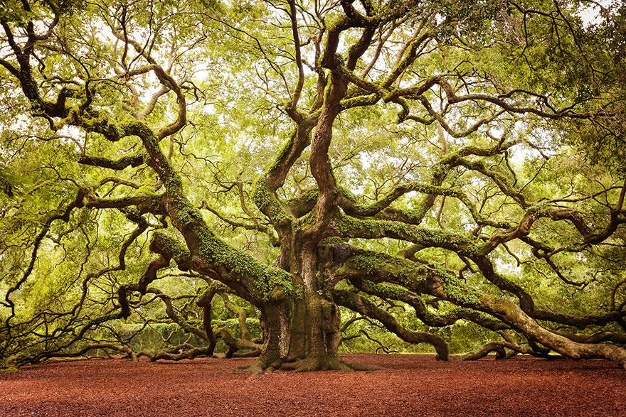 treesosha